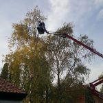 Der-Baumschnitt-im-Wipfelbereich-ist-mit-der-21-Meter-hohen-Gelenk-Arbeitsbühne-der-Firma-Arbeitsbühnenverleih-Sauberer-ohne-Problem-möglich
